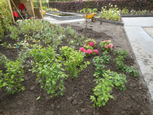 Tuinaanleg border beplanting